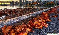 3-leaves-city.jpg