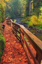 Sweet Creek Trail, Mapleton, Oregon.jpg