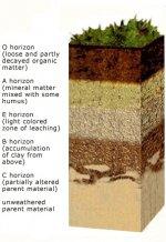 soil_horizons.uvm.jpg