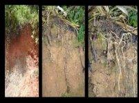 Azonal soil.visionagroecologica.blogspot..jpg
