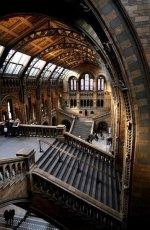 Natural History Museum, London..jpg